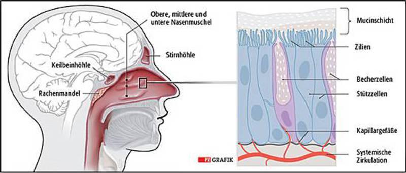 jucken im riechorgan