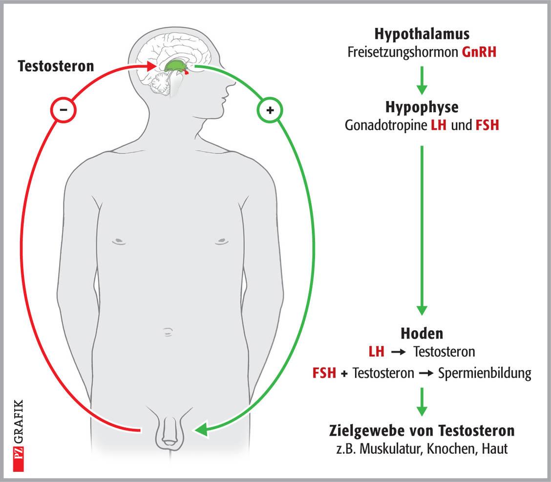 Polyoxidonium - Bőrgyulladás
