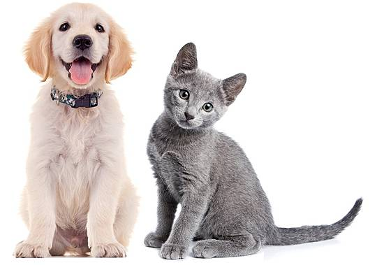 Gemeinsame Augenleiden bei Tieren: Hundeblick und Katzenaugen | PTA-Forum online &TT_51
